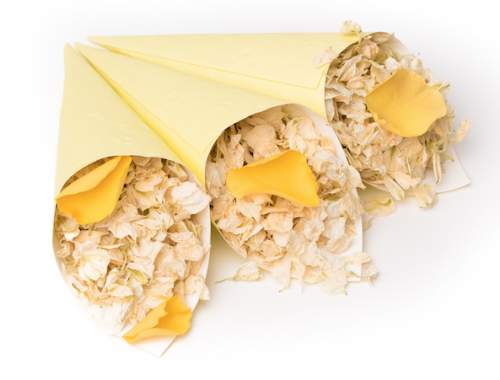 Icing_sugar_and_golden_slumber_in_yellow_cones