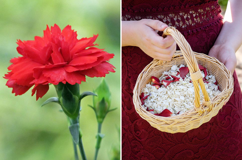 Red_Carnation_vs_Romeo_and_Juliet