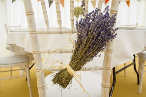 Lavender_on_rustic_chair