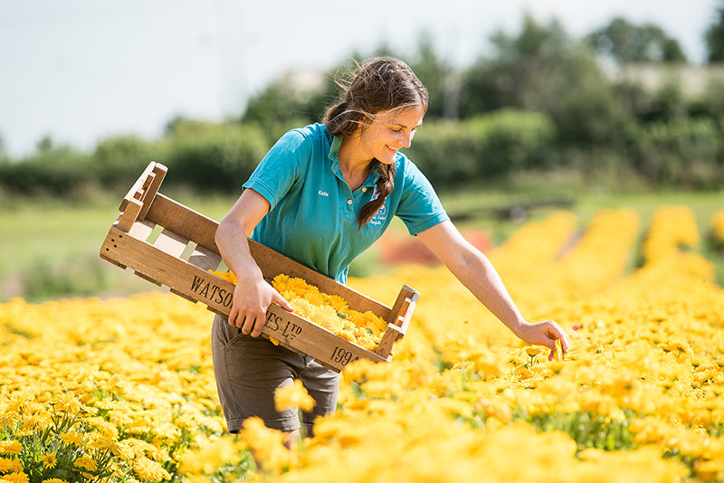 Picking_Flowers_in_field
