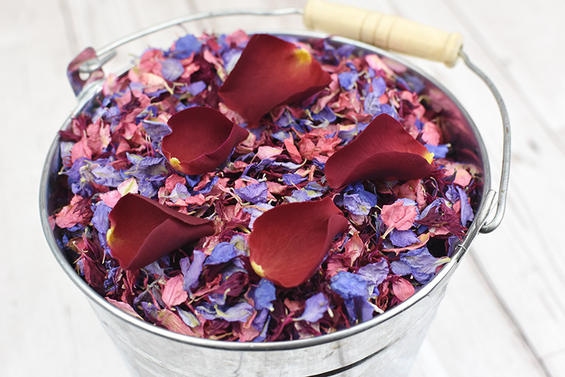 Shropshire_Petals___Silver_Pail___Raspberry_Fool__Burgundy_Berry__Amethyst__Lady_in_Red__01_
