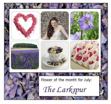 floer_of_the_month_july.._the_larkspur