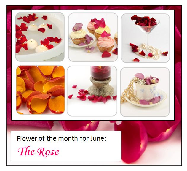 flower_of_the_month_JUNE