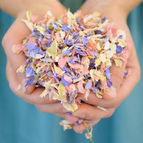 Shropshire Petals Confetti Biodegradable Petal Confetti Natural