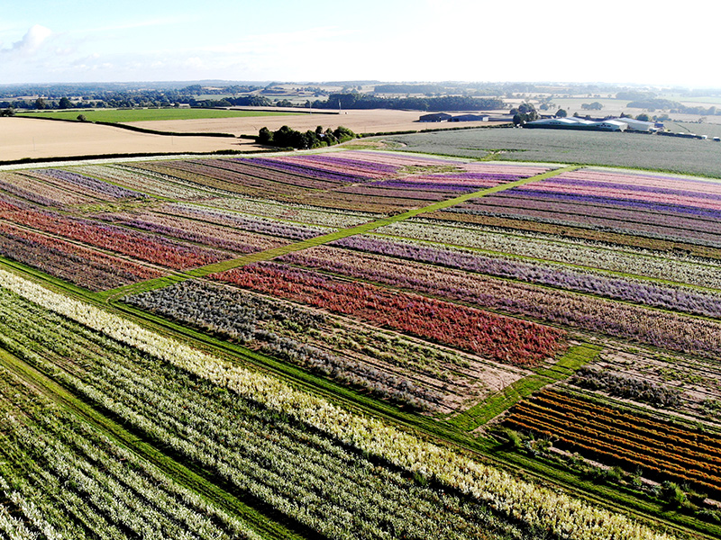 sp-aerial-flower-field-2018